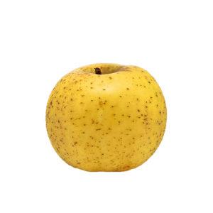 Pomme Chanteclerc – X3