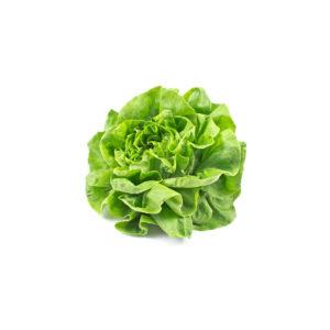 Salade Laitue – X1